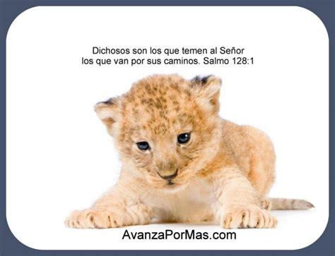 imagenes cristianas leones imagenes de leones con frases cristianas imagui