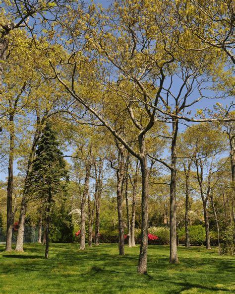 sterling forest trees sterling tree program