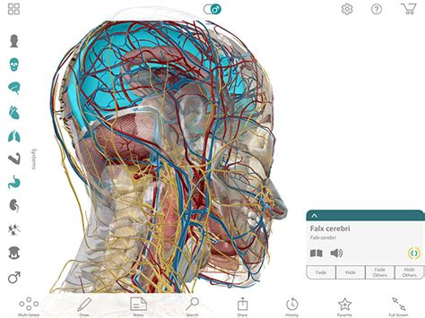 rhoton s atlas of neck and brain 2d and 3d images books human anatomy atlas by visible