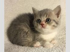SOLD! Congratulations Sunny! Kittens For Sale