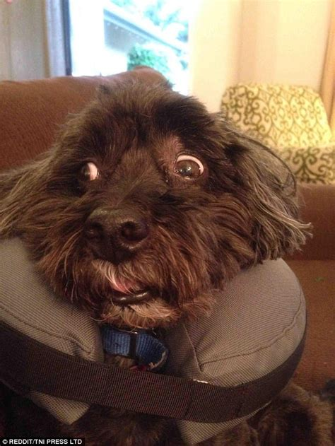 How To Keep Dog From Barking by Hilarious Pictures Show Cats And Dogs High As A Kite