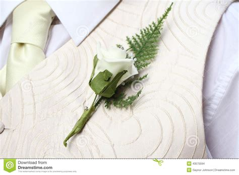 Pale Yellows Creams For Summer by Groom S Buttonhole Stock Photo Image 43575594