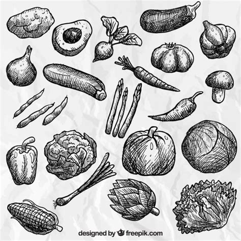 vegetables drawing vegetables collection vector free