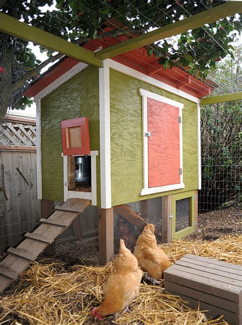 Backyard Chicken Blogs Infographic How To Build Our Backyard Chicken Coop The Tangled Nest