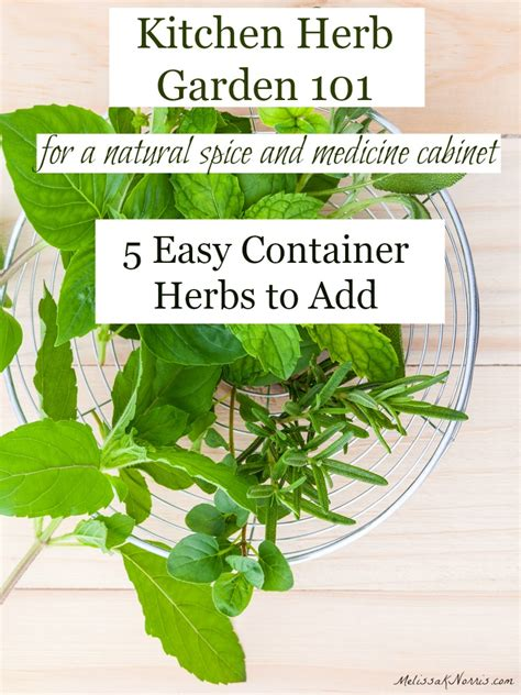 grow herbs in kitchen growing herbs for the kitchen 5 herbs you should be