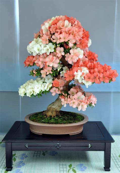 Bibit Bonsai Maple 2015 new 50pcs 24 jenis untuk memilih baru langka bonsai