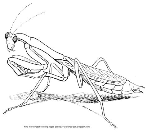 praying mantis coloring page crayon palace