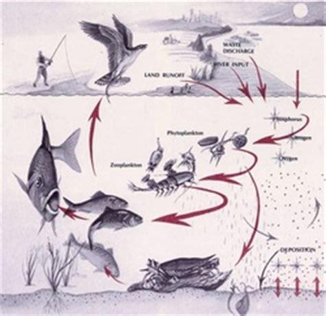 chesapeake bay food web diagram ecosystem of the chesapeake bay ecology