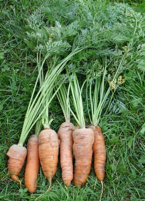 Que Peut On Planter En Septembre by Que Peut On Planter En Juillet Toujours Au Chaud Retour