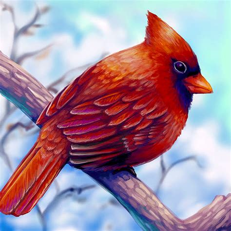 cardinal layer paint by charfade on deviantart