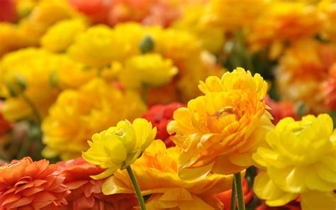 flowers photos 28 images photos of flowers photos of free download superior backgrounds 28 flowers hd quality