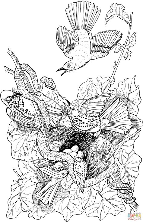 snake attacks brown thrasher nest coloring page free