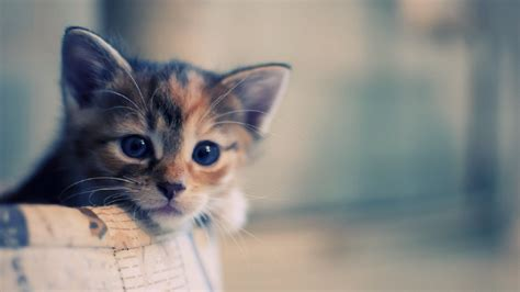 wallpaper hd 1920x1080 cute funny pictures funny cats wallpapers hd wallpapers fan