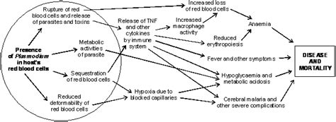 pathophysiology of malaria diagram parasite damage and host responses