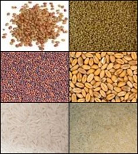 whole grains meaning in kannada list of grains and flours list of flours glossary of