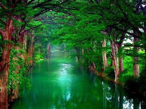 nature trees wallpaper   wallpaperscom