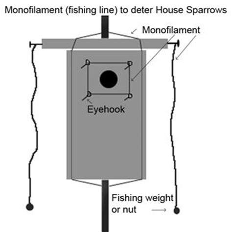obn house sparrow advisory