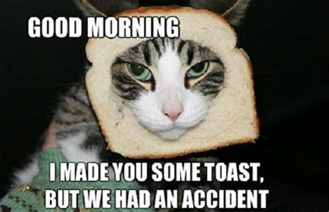 Cat Toast Meme - funny good morning memes 50 best