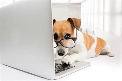 dogs at work 51 wonderful things your amazing teaches you