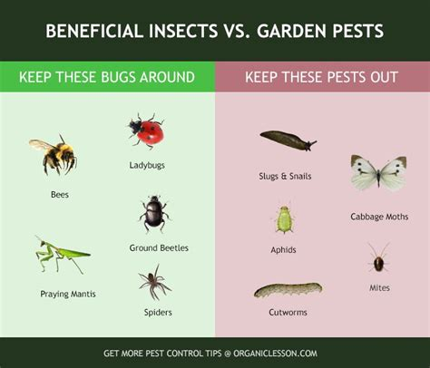 images  infographics  pinterest signs  termites garden pests  insect