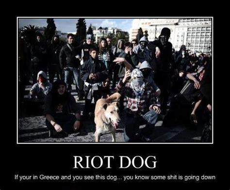 Riot Meme - image 49047 riot dog know your meme