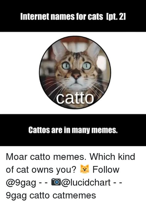Internet Meme Names - internet names for cats ipt 2l catto cattos are in many memes moar catto memes which kind of cat
