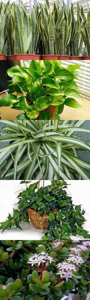 piante da interno resistenti i nomi di cinque resistenti piante da appartamento