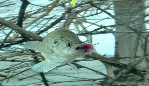 hot summer crappie fishing tips outdoorhub