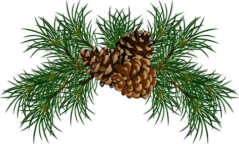 pine cone clipart pine garland pencil and in color pine