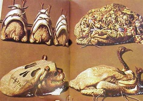 patterns in nature peter stevens pdf vintage books on pinterest patterns in nature diners