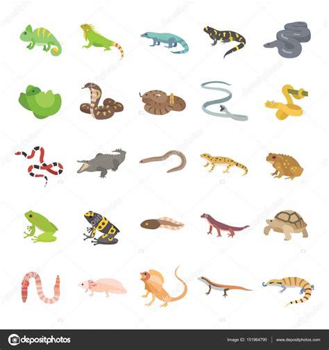 imagenes reptiles vector reptiles y anfibios de color los iconos de vector vector