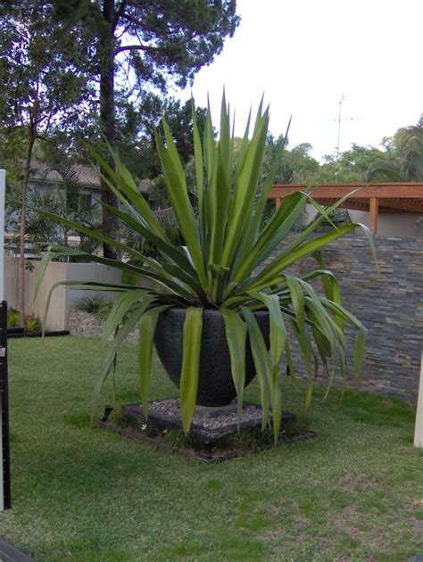 potanico large modern  contemporary pots