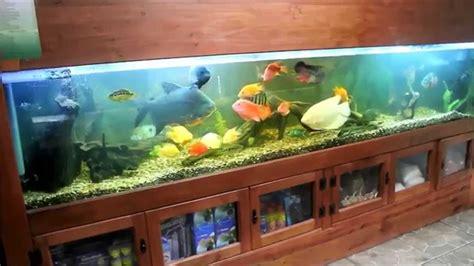 acuarios en casa acuario de exhibici 243 n la casa koi