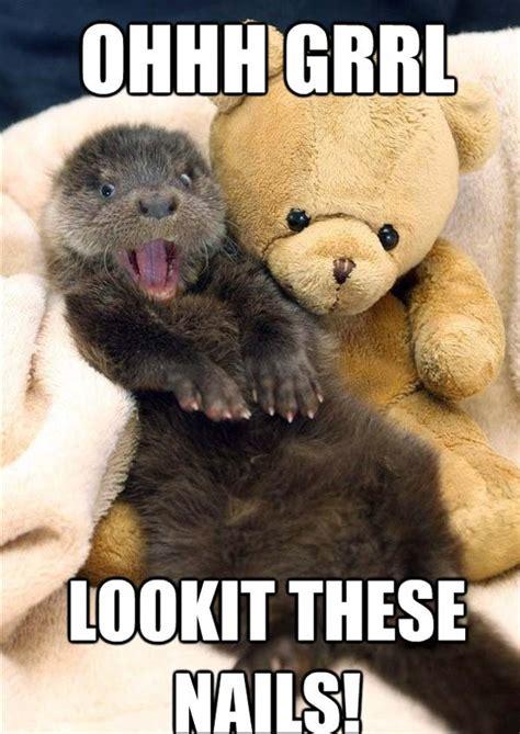 Otter Love Meme - my nails funny otter memes pics bajiroo com