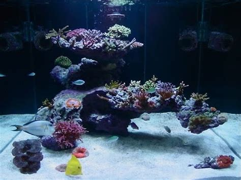 Saltwater Aquascape aquascape with fijireefrock a 75 gal tank 48 quot l x 18