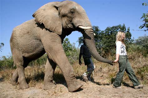 The Elephant Sanctuary Hartbeespoort Dam