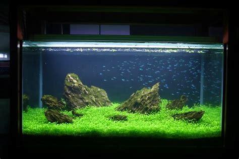 Neon Aquarium Decorations by Best 25 Tetra Fish Ideas On Freshwater Fish