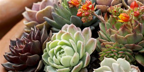 plants that do not need much sunlight how much sun does a garden need houseplants that don t