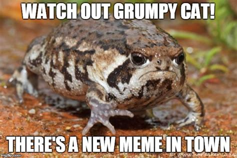 Frog And Toad Meme - grumpy toad imgflip