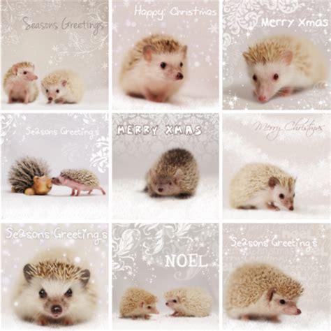 House Designs Free Hedgehog Christmas Cards