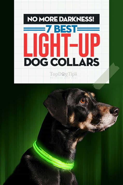 light up dog harness top 7 best light up dog collar choices for winter night