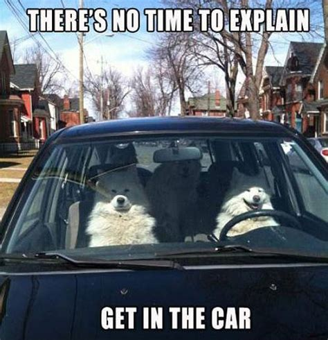 Dog In Car Meme - dog driving a car funny pictures quotes memes jokes