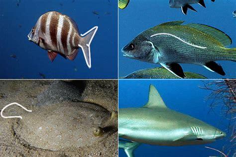 los peces de la el cuerpo de los peces recursos educativos educaixa