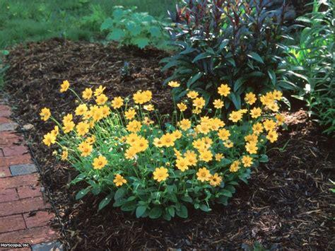 Mailbox Garden Candidates Hgtv Garden Flowers Annuals