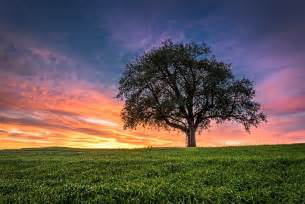 Landscape Pictures Of Trees Sunset Field Tree Landscape Wallpaper 2048x1367 282390