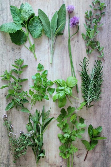 erbe aromatiche in cucina le migliori erbe aromatiche da utilizzare in cucina