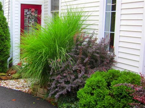 how to design a great yard with landscape plants diy