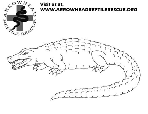 Free Coloring Pages Of Snapping Turtles Snapping Turtle Coloring Pages