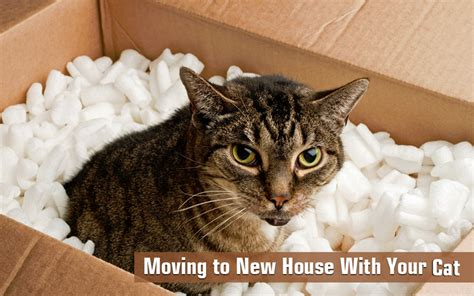 moving with cat how to moving a new house with your cat
