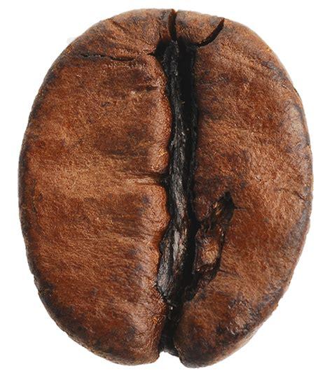 Coffeeiti   Artisan Coffee   Espresso   Latte Art   Coffee Maker